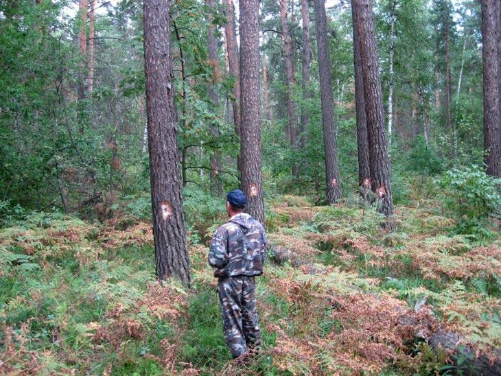Фото с сайта Центра защиты леса Алтайского края