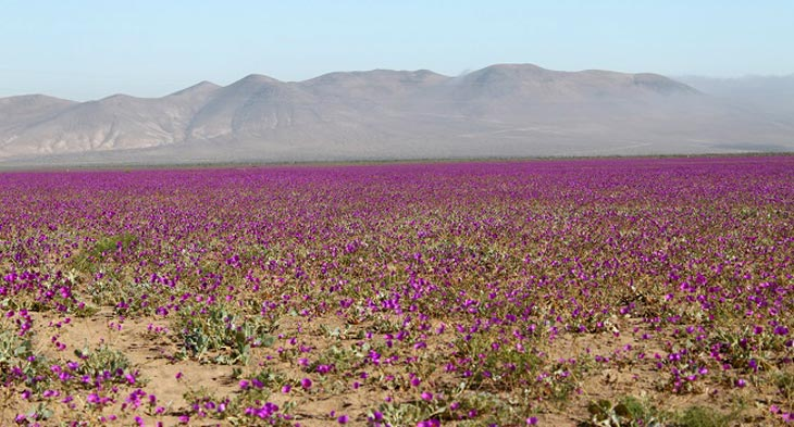Фото с сайта Chile Travel